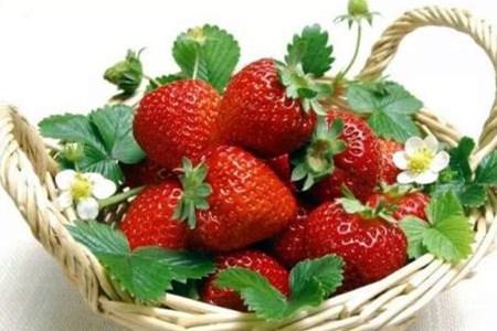 草莓要怎么挑选托哥教你.jpg